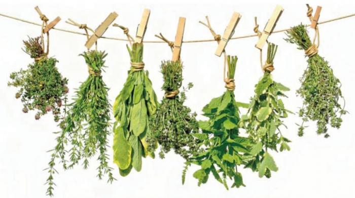 фото лечебные растения